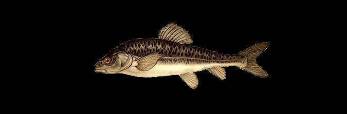 русская рыбалка волга голый осман: